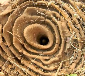 intricate ant's nest